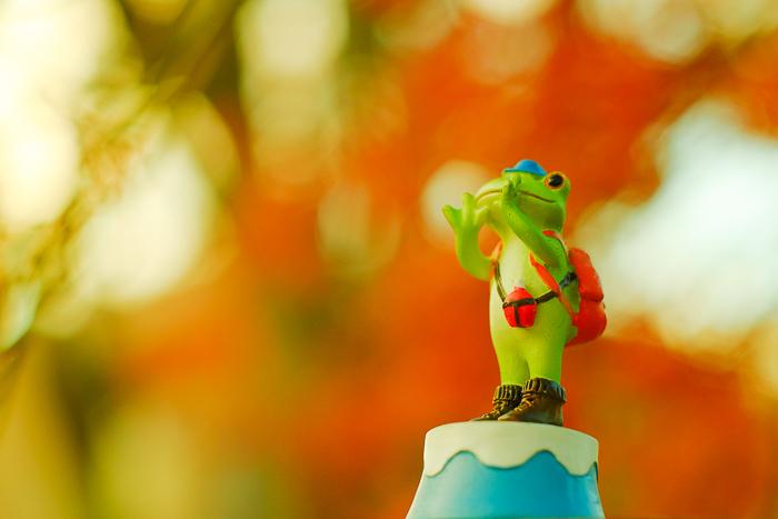 ツバキアキラが撮ったカエルのコポー。赤い紅葉に「ヤッホー!」と叫んでいるコポタロウ。