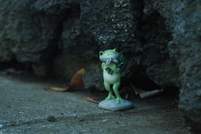 ツバキアキラが撮ったカエルのコポー。ちょうど良い具合の洞穴を見つけた、ドロボー・コポタロウ。
