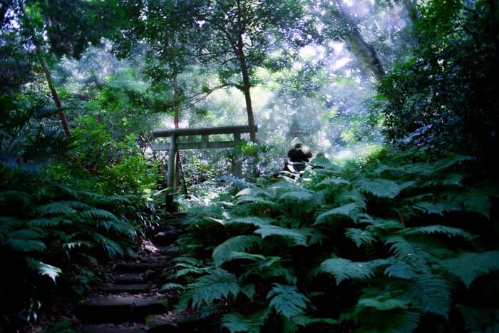 ツバキアキラが撮った、中原中也「木蔭」イメージ写真