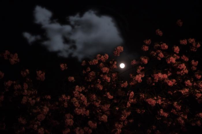 中原中也「春宵感慨」イメージ写真