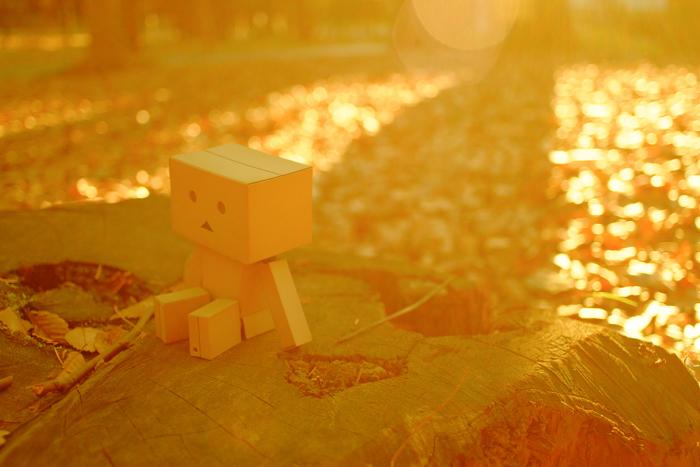 落ち葉が敷き詰められた公園で、切り株の上に座っているダンボー