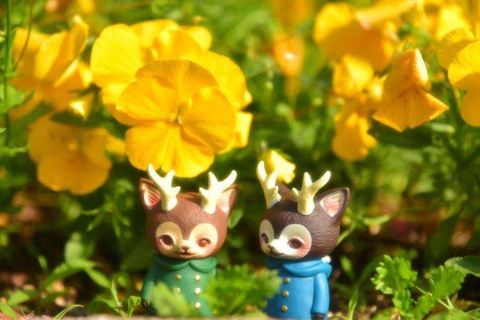 ツバキアキラが撮った、VAG・MORRIS、通称・つのねこ。お花畑で、緑のコートが葉っぱに溶け込んでしまいそう。