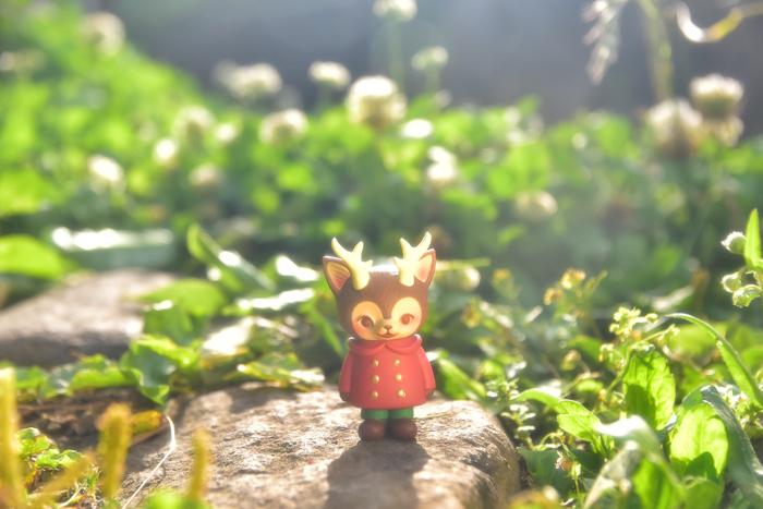 ツバキアキラが撮った、VAG・MORRIS、通称・つのねこ。さんさんと降り注ぐ太陽の下で、気持ち良さそうなつのねこ。