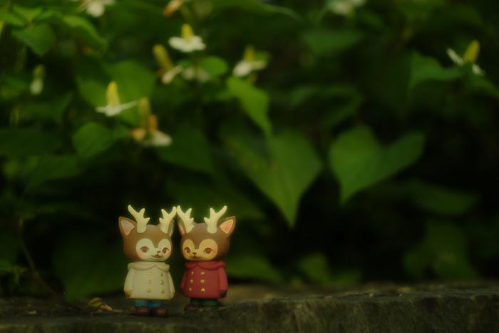 ツバキアキラが撮った、VAG・MORRIS、通称・つのねこ。どくだみの森に迷いこんだ、つのねこ達。