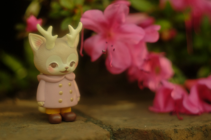 ツバキアキラが撮った、VAG・MORRIS、通称・つのねこ。ピンクの花を見つけて喜んでいる、ピンクちゃん。