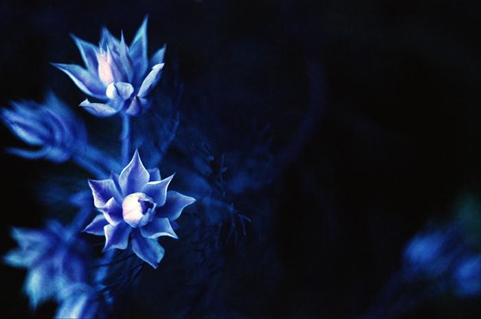 ツバキアキラが、PENTAX MEとLomo Chrome Purpleで撮ったフィルム写真